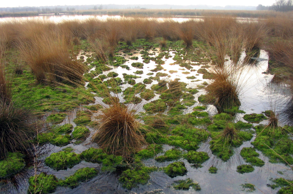 De bescherming van Natura 2000-gebieden (hier Engbertsdijkvenen) blijft vrijwel ongewijzigd in de Wet natuurbescherming ten opzichte van de Natuurbeschermingswet