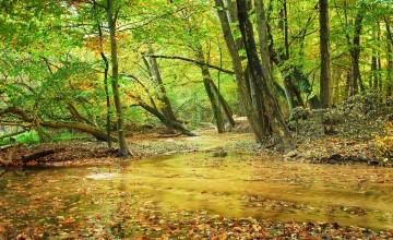 Indrukwekkende effecten door bodemverhoging Springendalsebeek