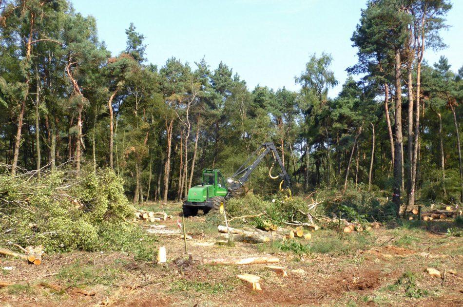 De processor velt de bomen, zaagt en sorteert het hout op maat voor de uitrijcombinatie