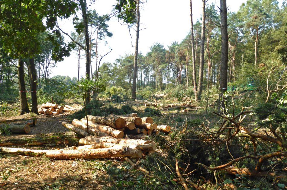 Het stamhout wordt door de processor gesorteerd op diameter en houtsoort. Met lint gemarkeerde bomen worden bij de boskap gespaard