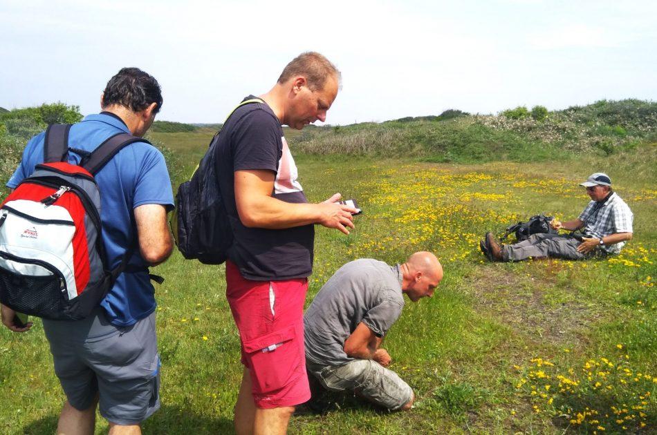 Flora onderzoek Vlieland