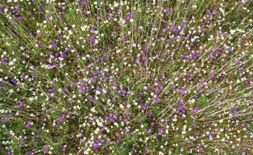 Is een protocol nodig bij de bescherming van planten bij ruimtelijke ingrepen?