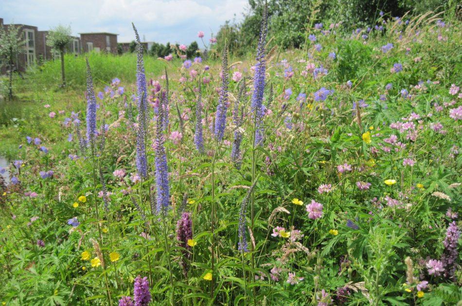 Bloemrijke berm aan het Stieltjespad in Colmschate: een eldorado voor planten en insecten. Foto: Martin Heinen, Ecogroen.