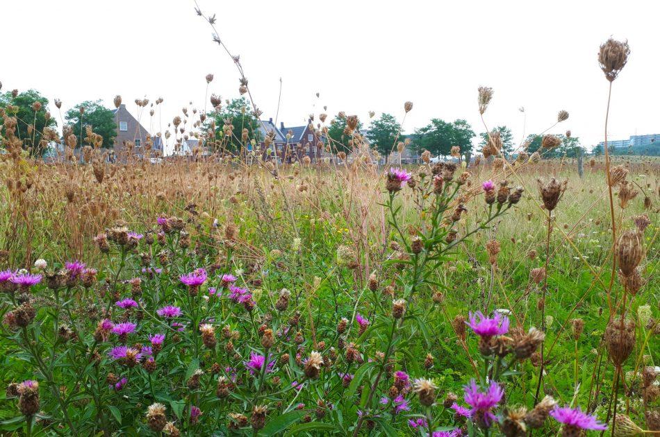 Bloemrijke graslanden vergroten de biodiversiteit in Steenbrugge. Foto: Martin Heinen
