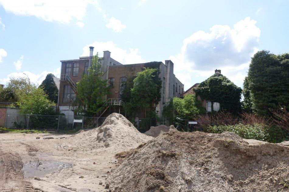 Braakliggende terreinen in de stad kunnen beschermde planten huisvesten (Foto Jos Hoekerswever)