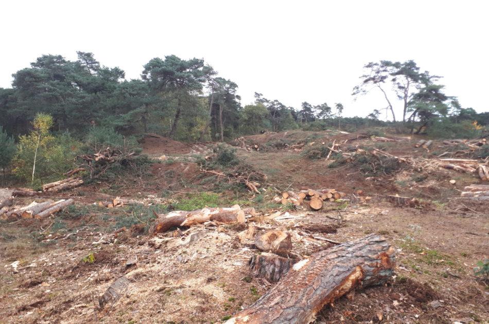 Door het verwijderen van bos krijgt zandverstuiving weer een kans