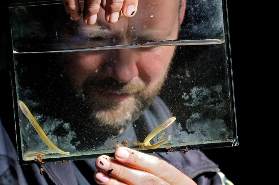 Jeroen Bosveld kijkt naar een gevangen beekprik