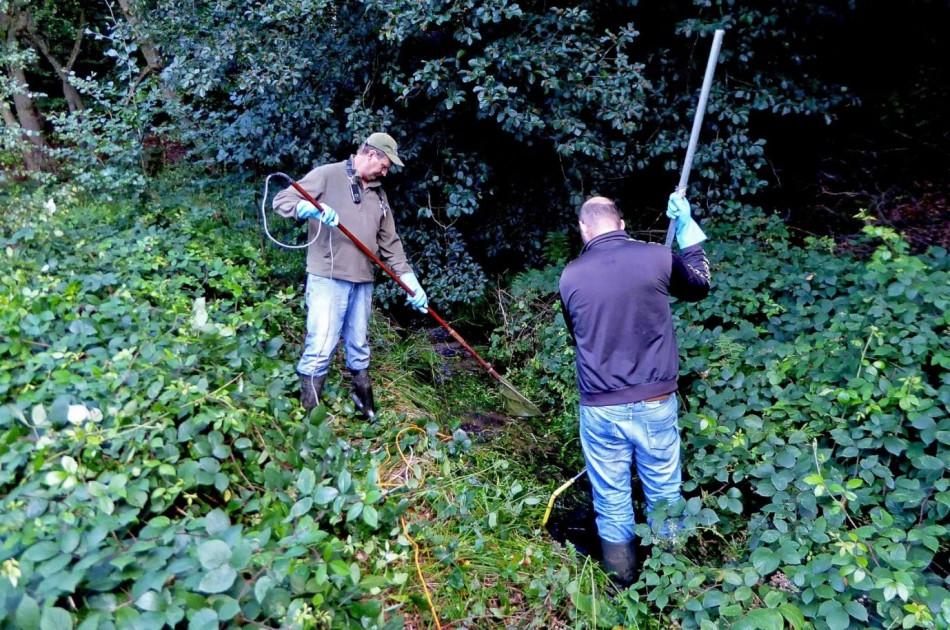 voordat de beek wordt aangepakt, vangen ecologen de beekprikken weg