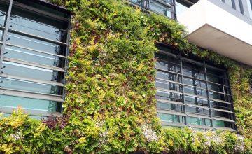 Meer groen en biodiversiteit in winkelcentra