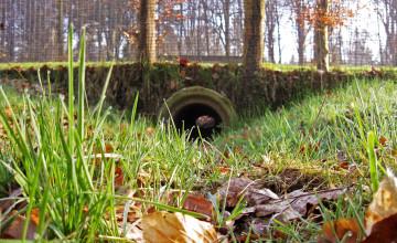 Dieren gaan liever door een tunnel dan over de weg