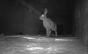 Recordgebruik faunatunnel Gelderland