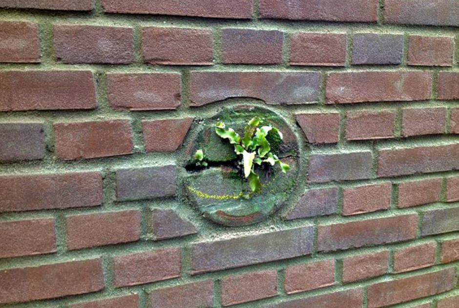 muurdeel met tongvaren