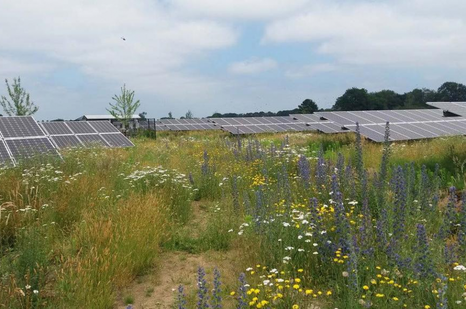 Opstelling zonnepanelen in grasland