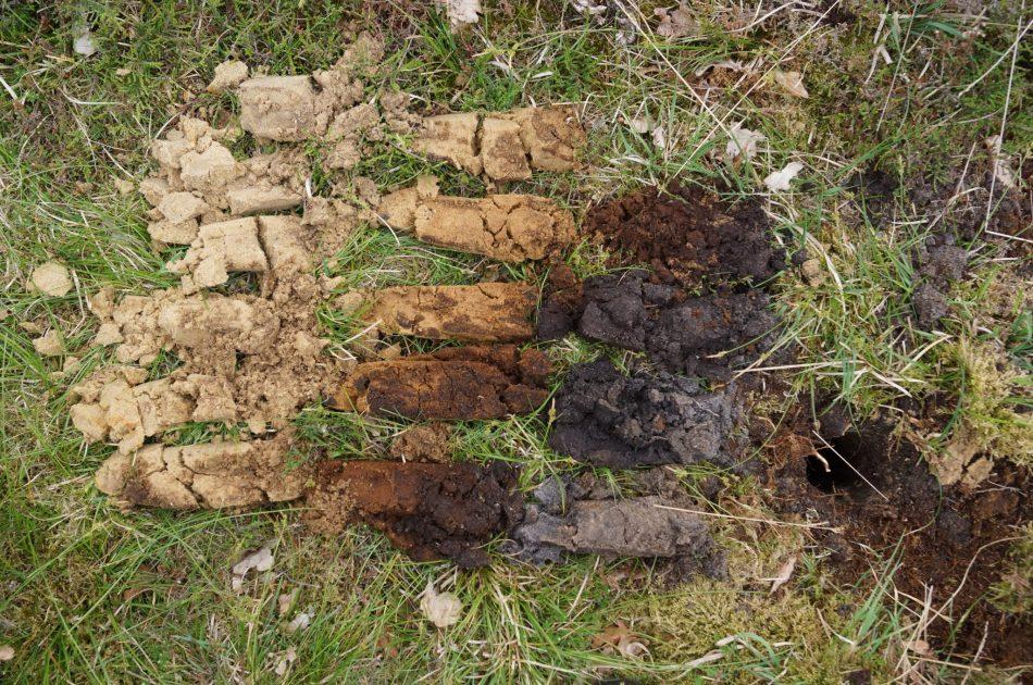 Veldpodzol-bodem in Buurserzand