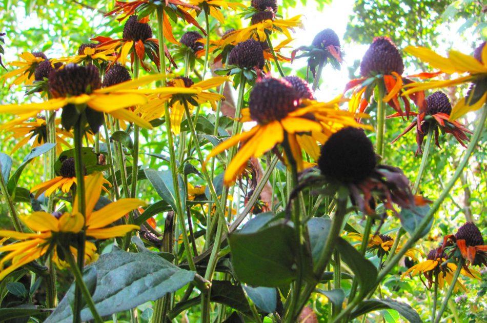 Robuuste vaste planten als nectarbron voor insecten. Foto: Martin Heinen