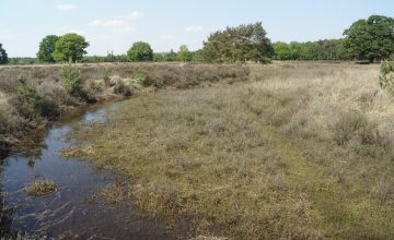 Ecohydrologische systeemanalyse