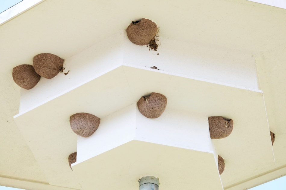 Aan de poepsporen is te zien dat ook deze til volop in gebruik is. Ook zijn huiszwaluwen hier begonnen met het zelf bouwen van een nest. De onderzijde van de til is opgeruwd om nestbouw te vergemakkelijken.