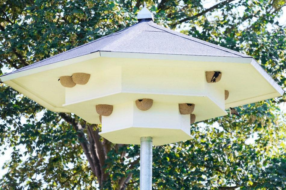 Huiszwaluw volop aanwezig in een van de tillen. In de twee nestkommen linksboven steken nog net de kopjes van huiszwaluw naar buiten. Rechtsboven brengt een huiszwaluw een bezoek aan zijn nest.