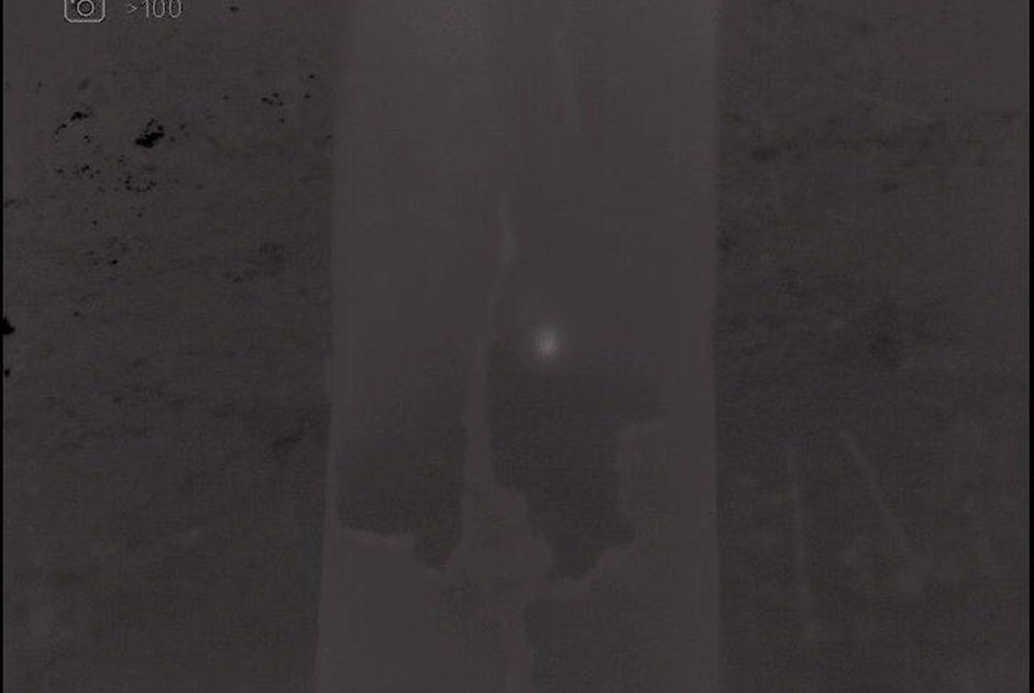 De gewone dwergvleermuis licht met de warmtebeeldcamera zelfs door de boomschors heen op. (Foto: Mark Hoksberg)