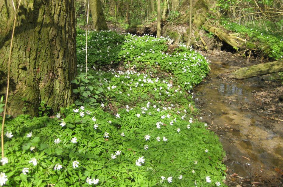 De bescherming van Natura 2000-gebieden (hier Springendal & Dal van de Mosbeek) blijft vrijwel ongewijzigd in de Wet natuurbescherming ten opzichte van de Natuurbeschermingswet