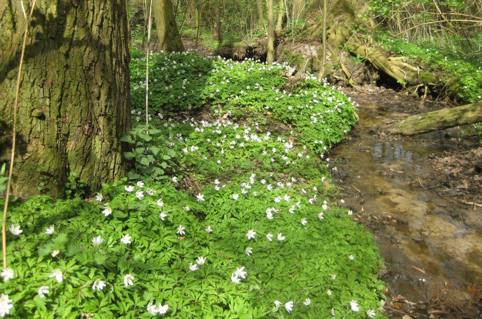 Dempen van sloten is een PAS-maatregel in de Springendalsebeek en Dal van de Mosbeek; het herstelt de hydrologie van de hier aanwezige beeksystemen en de hiervan afhankelijke habitattypen