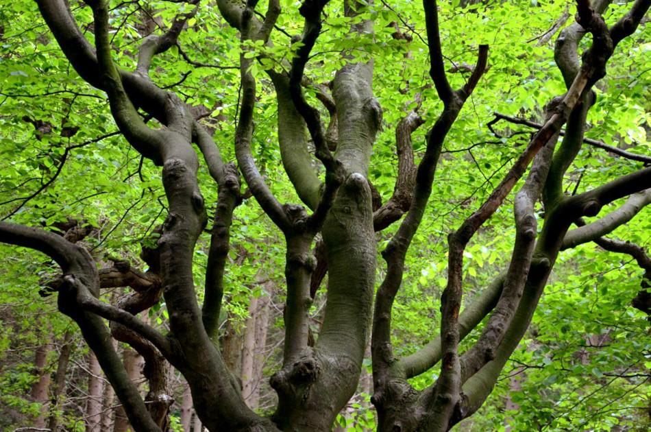 berceau (detail) in het Baarnse bos