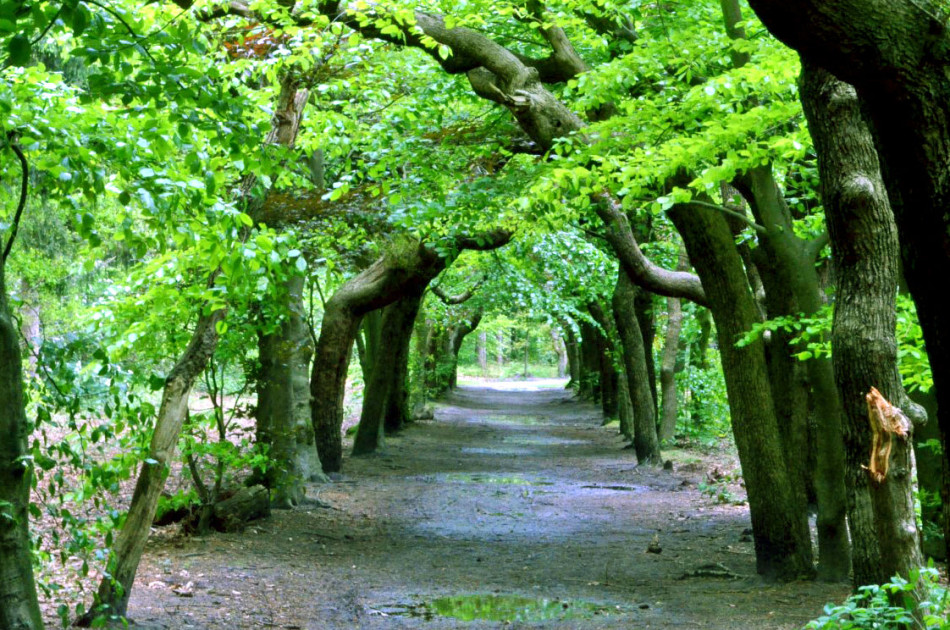 berceau in het Baarnse bos