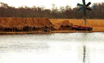 Monitoring effecten watermaatregelen Scheerwolde en Weteringen