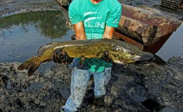 Ecologische begeleiding: maatwerk in soortbescherming